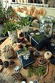 Weihnachtsgeschenke mit Sternen und Zweigen vom Lebensbaum, Drahtwein, Zapfen und Juteschnur auf dem Tisch verteilt