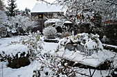 Snowy garden in winter
