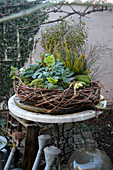 Hellebore, moss and heather in wreath of vines