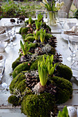 a Set table with a garland of moss with hyacinths, cones, and ragwort in the middle of the table