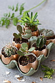 Cacti and succulents planted in egg shells