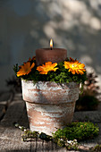 Arrangement of marigolds, candle and moss in terracotta pot