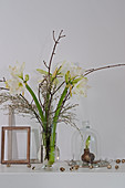 White amaryllis, broom and twigs in glass vase and sprouting amaryllis bulb under glass cover