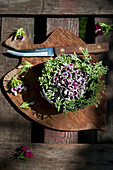 Arrangement of sweet William and stonecrop in small bowl