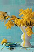 Strauß aus blühenden Mimosenzweigen