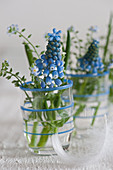 Blue grape hyacinths and forget-me-nots in shot glasses