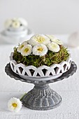 Arrangement of white bellis and moss on metal cake stand
