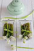 White grape hyacinths and moss in old glass scoops