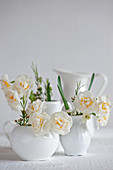 Narcissus and Australian waxflowers in white milk jugs