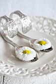 Bellis on curved spoons on vintage-style perforated plate