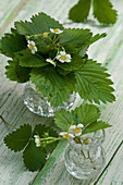 Posies of wild strawberry flowers in crystal vases