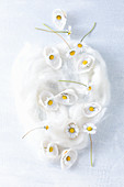 Daisies in white seashells on piece of felting wool
