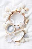 Still-life arrangement of various seashells on white fabric