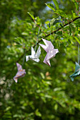 Origami birds hung in tree as spring decorations