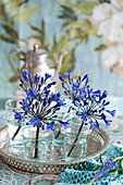 Blue agapanthus in small glasses on silver tray