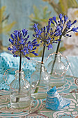 Blue agapanthus in small glass bottles