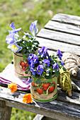 Leere Konservendosen mit Hornveilchen bepflanzt