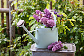 Bouquet of lilacs, branches of chestnut leaves and aquilegia in watering can