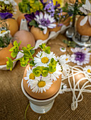 Daisies in eggshell