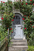 Flowering climbing rose on house wall framing front wall