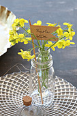Flowering rocket in jar with hand-written label on elegant glass plate