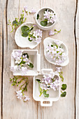 Kleine Dekoration mit Blüten der Glockenblume