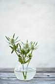 Distelblüten in Glasvase