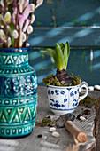 Hyacinth planted in vintage teacup