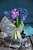 Free-standing bouquet of hyacinths in dish of water