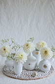 Dahlias and gypsophila in white vases