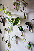 Pflanzenableger in Glasflaschen an der Wand als Deko