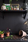 Potting table below miniature cacti on shelf on black wall