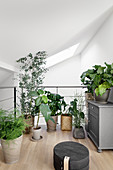 Houseplants on gallery level below sloping ceiling