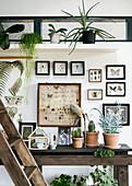 Insektenkästen und Zimmerpflanzen an der Wand als Vintage-Deko