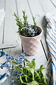 Flowering rosemary sprigs in a cup, forget-me-nots lying
