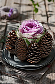 Arrangement of ornamental cabbage and pine cones on pewter plates on wooden table