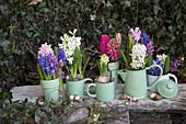 Hyacinths in pale green vessels