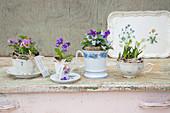 Spring flowers in teacups