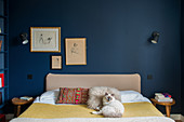 Cat on double bed in bedroom with dark petrol-blue walls