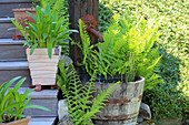 Water barrel with horsetails, ferns, pots with plants on Shorea laevis stairs
