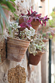 Succulents in pots mounted on wall