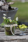 Wood anemone in a glass with lace ribbon, primroses