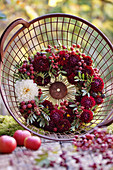 Wreath of dahlias, unripe blackberries and mastic pistachio in a harvest basket