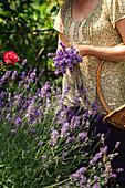 Frau mit Lavendelsträusschen