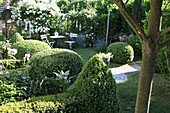 Clipped box hedges, seating area and white climbing rose in garden