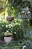 Small corner of lush garden