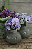 Violas and lilac in small spherical vases
