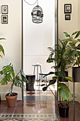 Houseplants flanking doorway in period building with Italian tiled floor
