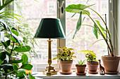 Zimmerpflanzen und antike Tischlampe auf Fensterbank
