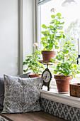 Zimmerpflanzen auf Fensterbank, darunter eingebaute Sitzbank mit Kissen